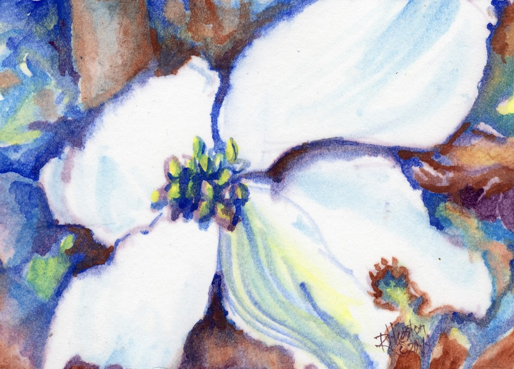 001 Native Dogwood (Cornus florida) 2014 5x7, watercolor