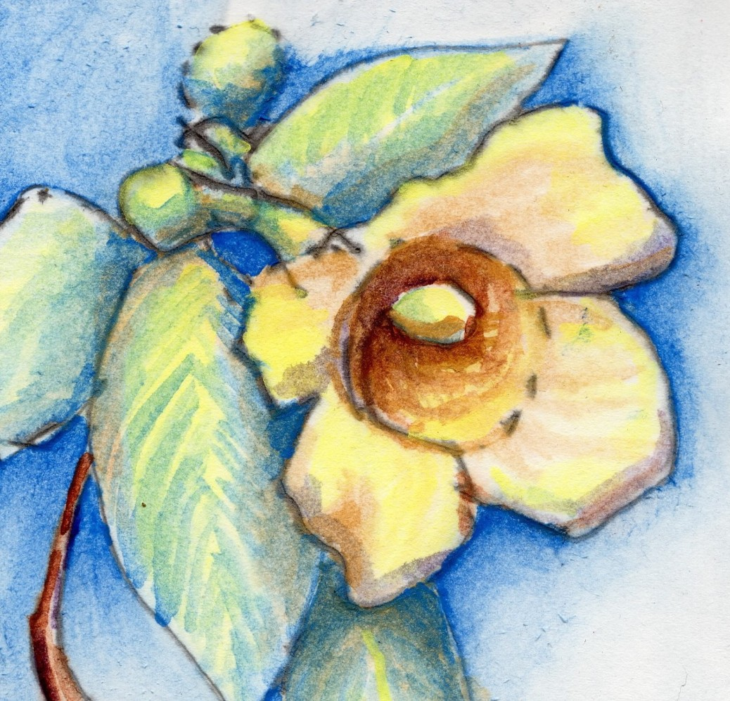 carolina Jessamine feature