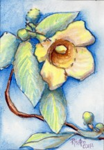 Carolina Jessamine 5x7, watercolor, 3/23/2014