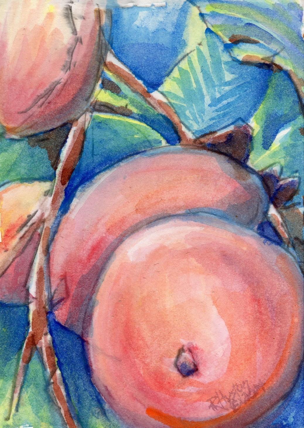 Persimmon...Diospyros virginiana L. 5x7. watercolor