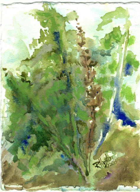 Netted Chain Fern...Woodwardia areolata 5x7, watercolor on 300lb coldpress Arches