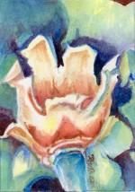 Tulip Poplar…Liriodendron tulipifera 5x7, watercolor