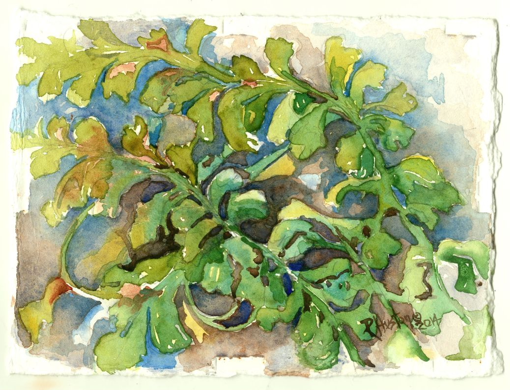 Mountain Spleenwort (Asplenium montanum) 5x7, watercolor on 300lb cold press paper