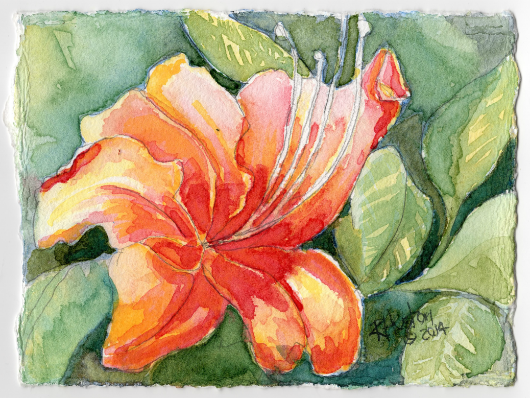 The Oconee Azalea- Rhododendron flammeum 5x7, watercolor on 300lb coldpress paper