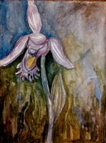 Orchid 02 ...Rose Pogonia (Pogonia ophioglossoides) 11x15, watercolor, charcoal