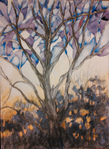 Winter Pecan 11x15, charcoal and watercolor