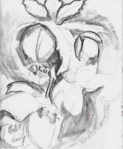 Lenten Rose 01 (Helleborus orientalis) 9x12, charcoal on 95lb Canson xl series mixed media paper