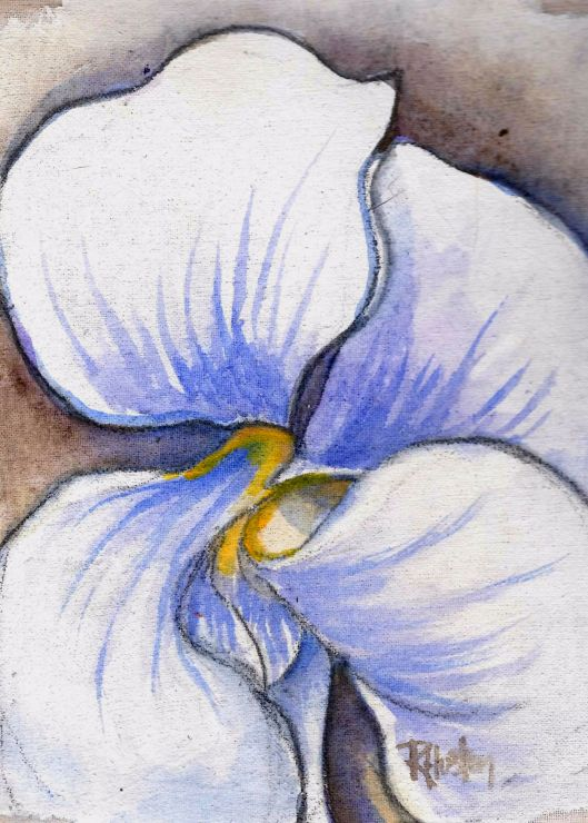 Violet 03 (Viola alba) 5x7, acrylic and charcoal on muslin