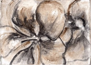 Swamp Hibiscus 02 ...(Hibiscus coccineus) 7x5, charcoal and matte medium on muslin
