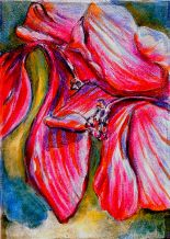 Swamp Hibiscus 03 ...opening blooms 9x12, acrylic and charcoal on muslin