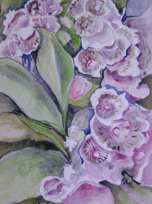 mountain laurel 04 (11x15, watercolor and charcoal on 140lb hotpress)