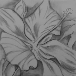Botanical Garden 09... Swamp Hibiscus (Hibiscus coccineus) 10x10, (charcoal)