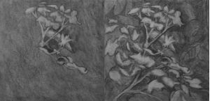 Botanical Garden 10 underdrawing charcoal