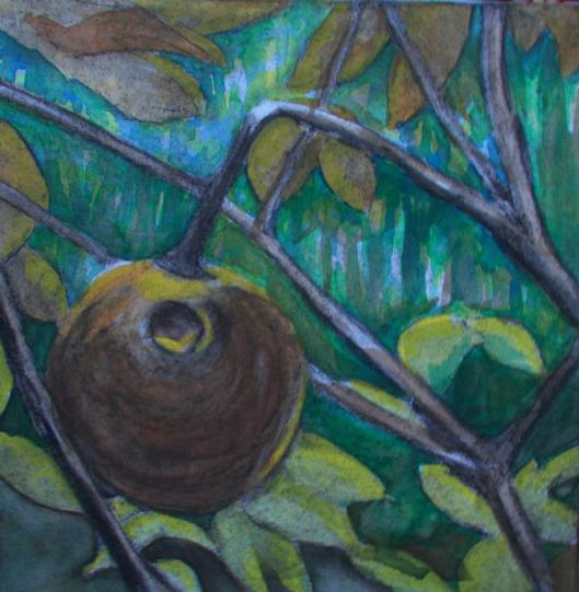 Aesculus sylvatica (painted buckeye) Botanical Garden 07 10x10, mixed media (watercolor and charcoal)