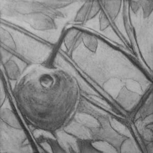 Botanical Garden 07 (process) 10x10, charcoal