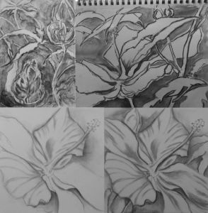 Swamp Hibiscus drawings Charcoal