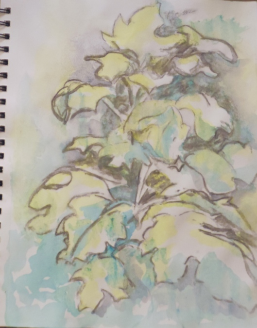 Botanical Garden 22... Oakleaf Hydrangea 9x12, mixed media (charcoal and watercolor) ©Richard Huston 2015