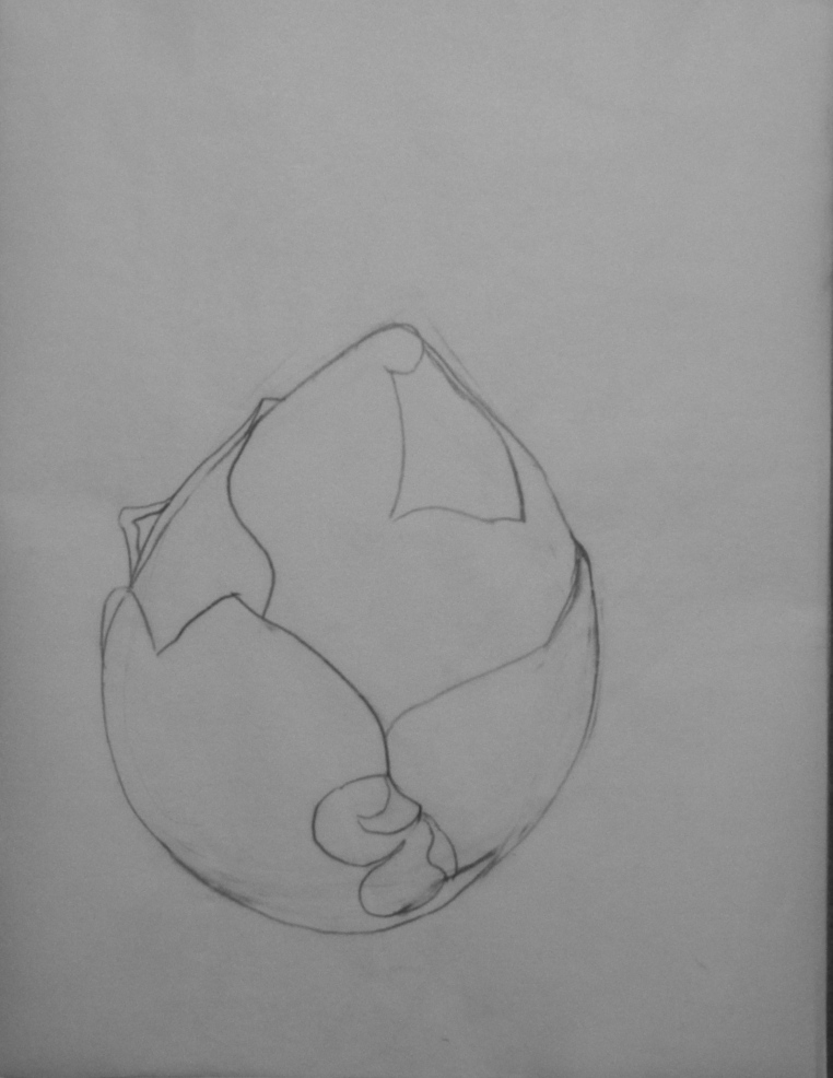 Botanical Garden 30_b 9x12, graphite value study on tracing paper (process)
