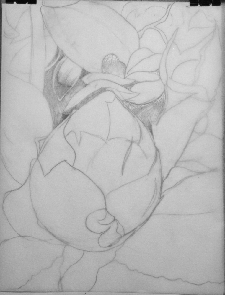 Botanical Garden 30_c 9x12, graphite value study on tracing paper (process)