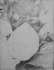 Botanical Garden 30_e 9x12, graphite value study on tracing paper (process)