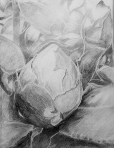 Botanical Garden 30_f 9x12, graphite value study on tracing paper