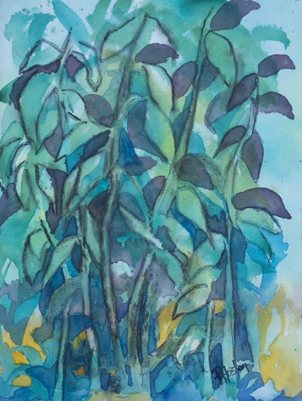 River Cane... Arundinaria 11x15, mixed media (watercolor and charcoal)